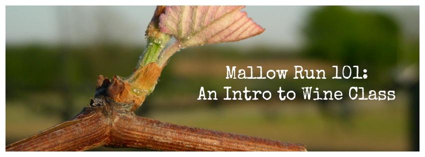 Wine Education at Mallow Run Winery!