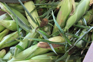 Freeze Sweet Corn
