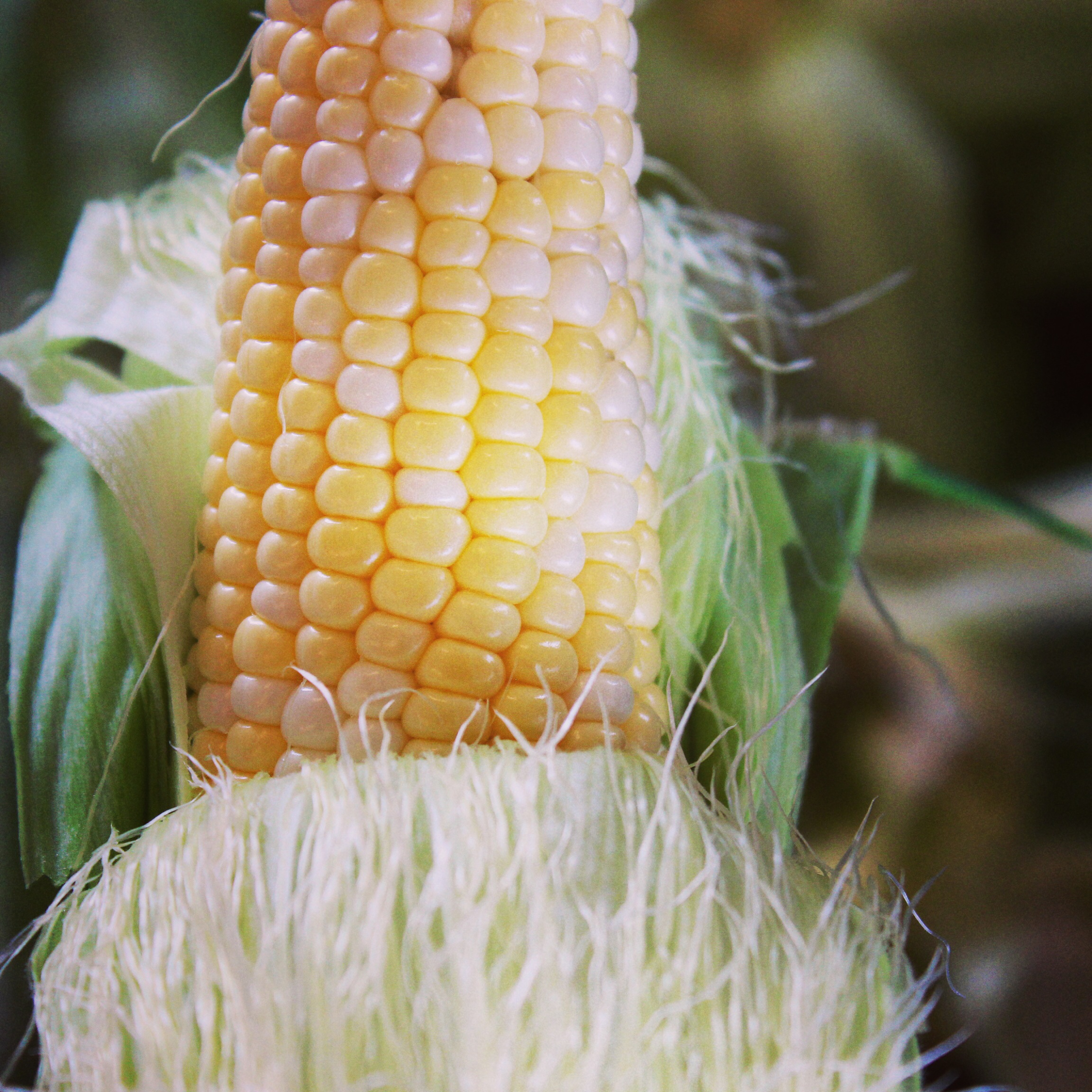 Freeze Sweet Corn