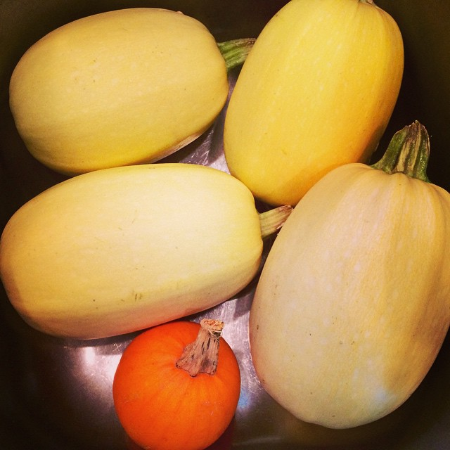 Washing Spaghetti Squash for tomorrow's SSquash and sausage sauté at @FreshThymeFM in #indy