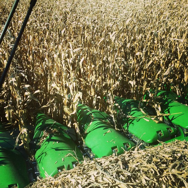 #Harvest14 of @INCornFarmers while riding on the combine! #FarmsMatter #JohnDeere @FamilyofFarmers