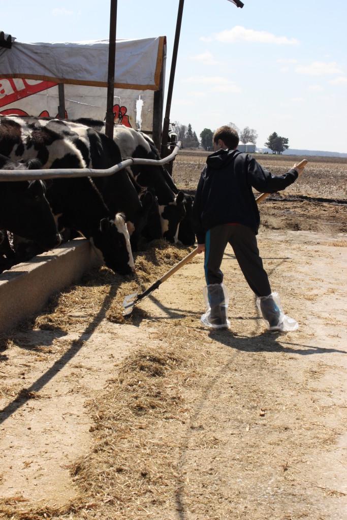 Troxel Dairy Farm @Basilmomma