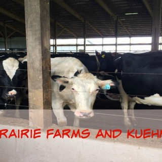 A Day at Prairie Farms and Kuehnert Dairy