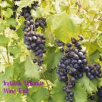 Indiana Uplands Wine Trail