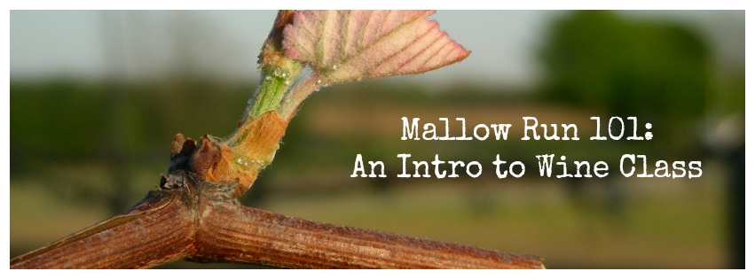 Wine Education at Mallow Run Winery!